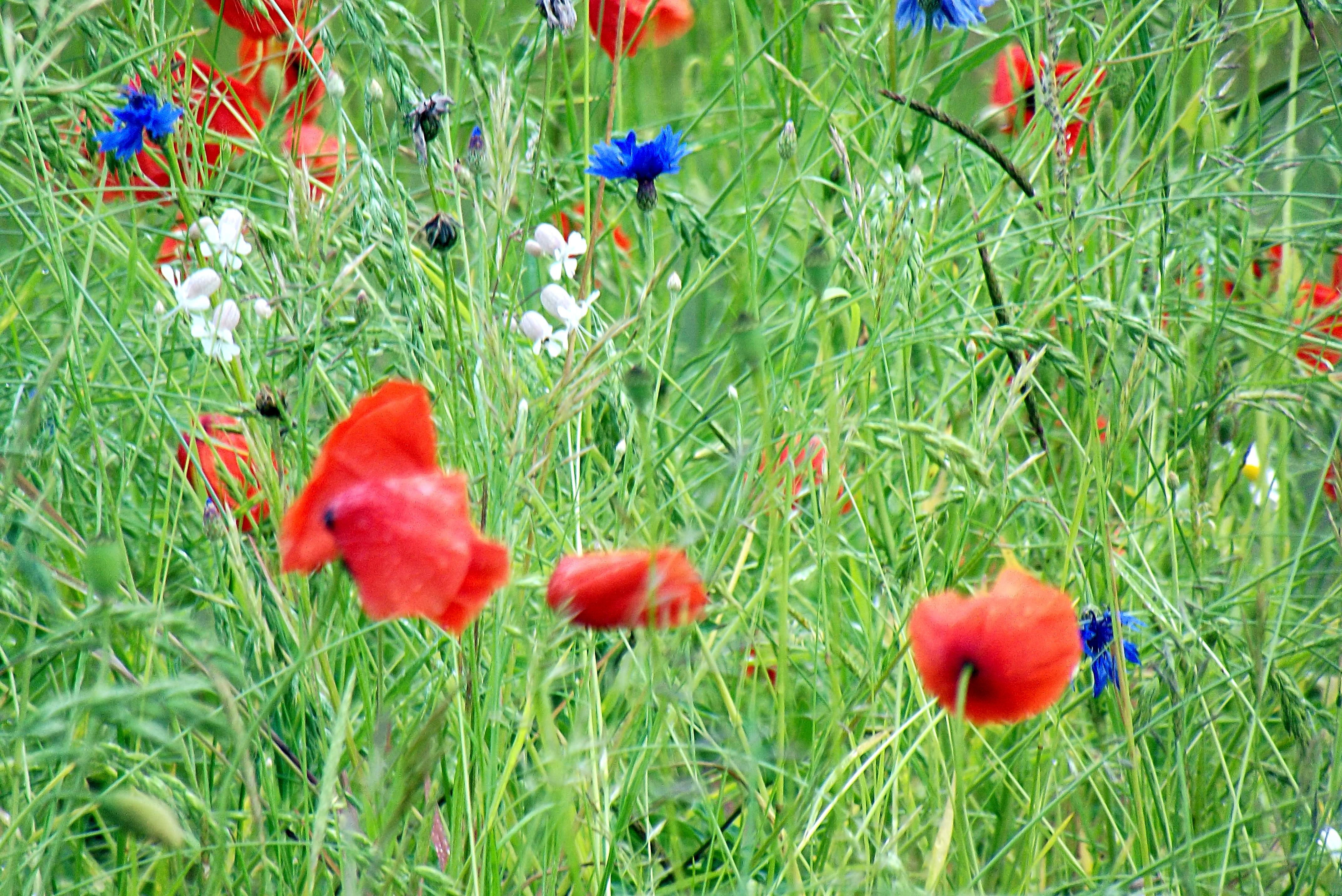 Blumenwiese_2